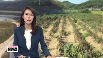 Farmers fear fruitless harvest due to prolonged drought