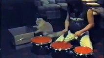 Drummer Cat! Le chat qui fait de la batterie avec son maitre! Duo de feu....