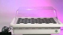 Hydroponics Clones Boxes For Perfect Clone Development
