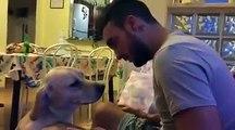 Пес просит прощения!