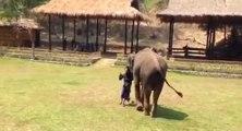 L'incroyable réaction d'un éléphant envers son soigneur