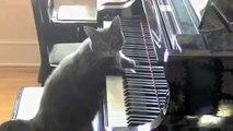 CATcerto ORIGINAL PERFORMANCE Mindaugas Piecaitis, Nora The Piano Cat