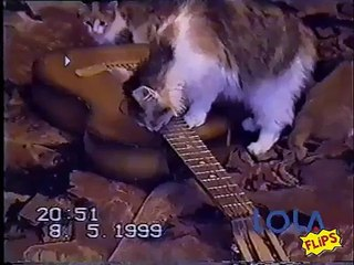 Amazing cat plays guitar!!! - Video Dailymotion