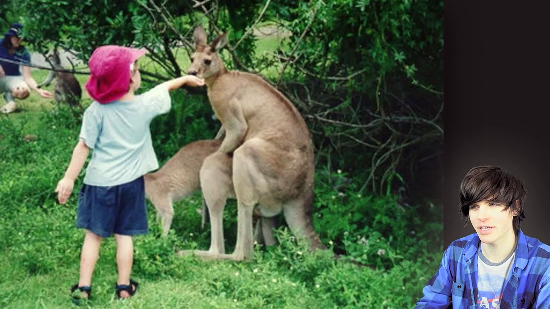 Animal Sec Movies animals having sex