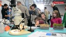 Rennes. Plus de 6.000 visiteurs au village des sciences
