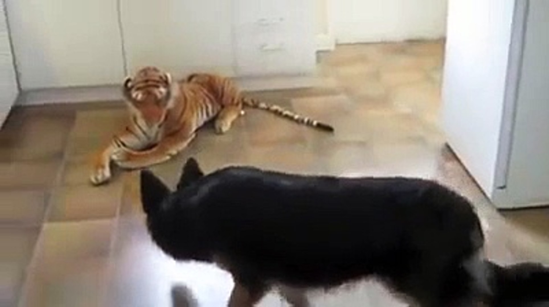 German Shepherd scared of Stuffed Toy Tiger. Very Funny! (ORIGINAL VIDEO