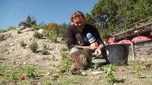 D!CI TV : Bienvenue chez vous à la montagne aux marmottes