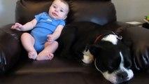 Ce bébé fait caca dans sa grenouillère, et regardez bien la réaction du chien... c'est hilarant !