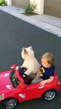Mascota paseando a niño en su Ferrari