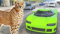 ¿MAS RAPIDO QUE UN CHEETAH? - Gameplay GTA 5 Online Funny Moments (Carrera GTA V PS4)