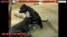 Perro que le gusta que perra se lo chupe | Videos Graciosos HD