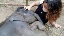Une jeune femme câline un éléphanteau
