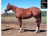 Picture collection of horses   Appendix Quarter Horse