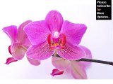 orchid flower | orchid flower set of image collection