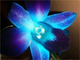 Pearl Orchids - video dailymotion