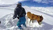 Ce cheval était coincé dans la neige sur une montagne