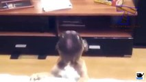 Cute puppies barking and talking Funny dog compilation