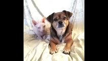 Whos your best friend Dog Loves Cat Vine By Lilly And The Hairless