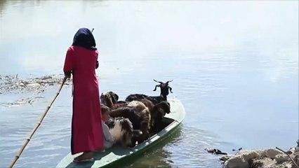 جزيرة العبيد بمحافظة الإسكندرية تعاني إهمالا شديدا