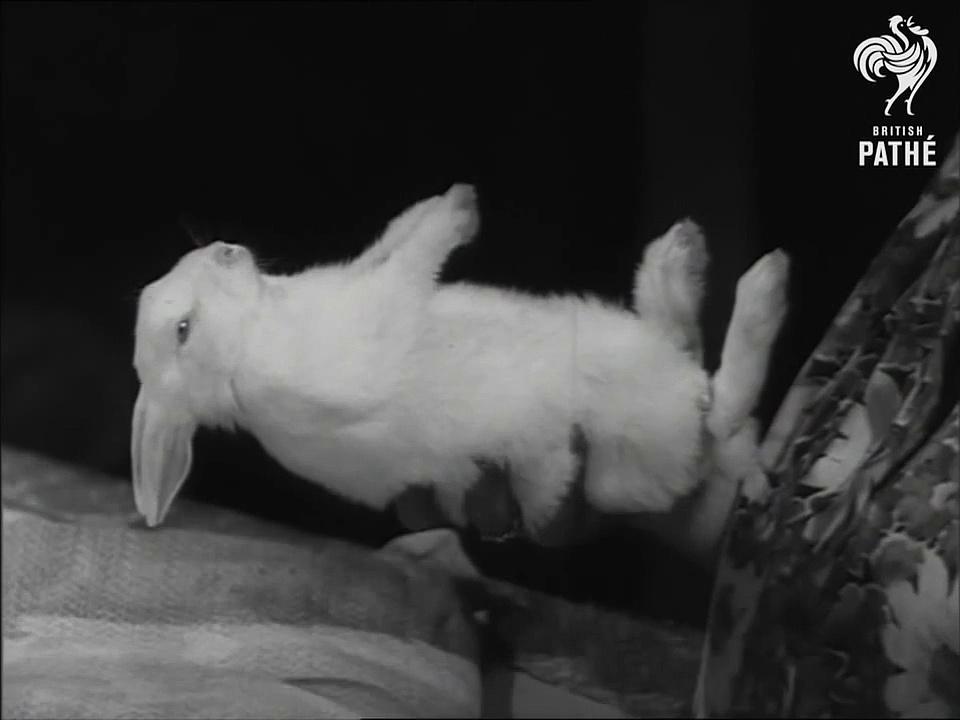 Weird! Hypnotised Rabbits!-vDXqFiA8hVM
