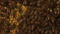 1 jour 1 action: des abeilles dans l'école!