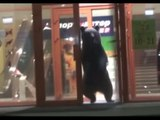 Ordinary day in Russia: Bear breaks into kindergarten & shopping mall