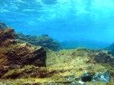 Virus : les maîtres des océans