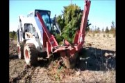 Tree Digging at HH Farm in Pa       White Pine trees