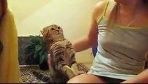 Aşırı İlgi İsteyen Kedi