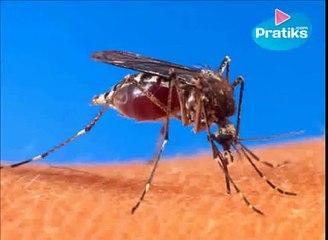 Astuce pour piéger les moustiques