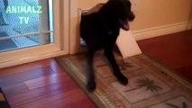 Porte per cani grandi e piccoli. Divertente grande cane striscia in porta gatto
