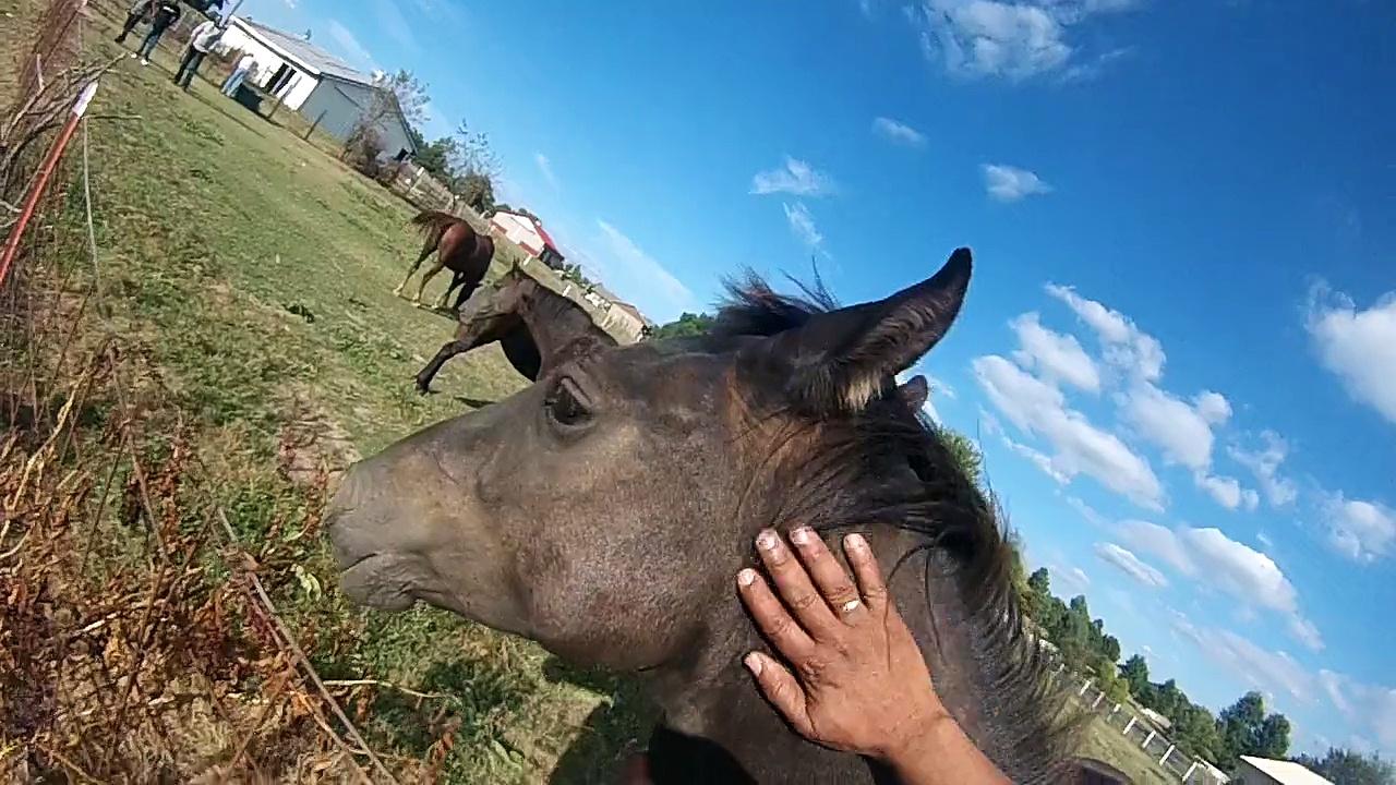Patrick's Horses