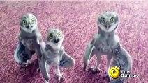 Hilarious baby owls singing hip hop song