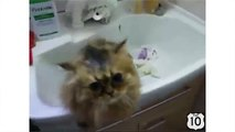 Exposure of a frightened cat. Funny cat bathed and dried