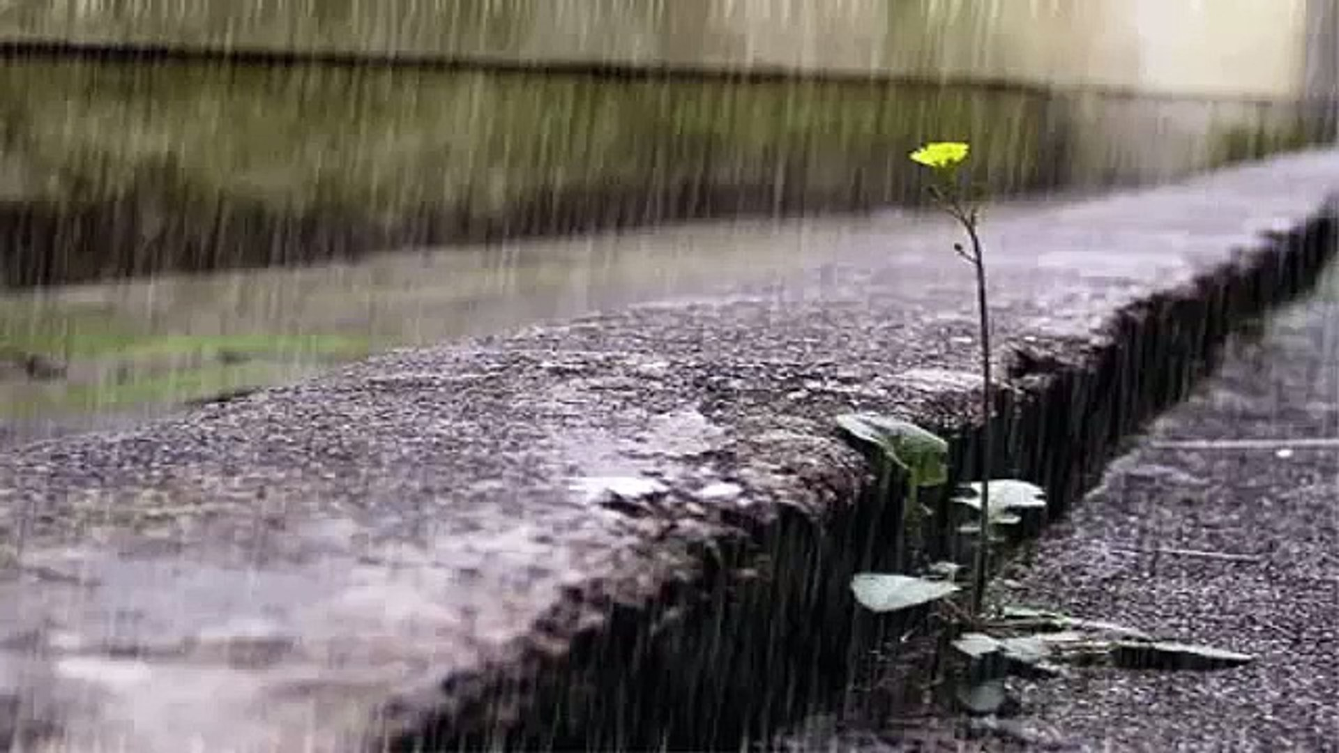 Relaxing Music - Massage Music - Spa Music - Soothing Music - Calming Music - Relaxation - ( rain )