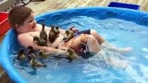 Prendre son bain avec des vrais canards... Canetons trop mignon