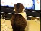 ★ Este Gato Me Asusto! ★ Los Mejores videos de gatos ★ Humor Gatos Chistosos Divertidos Risa