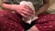 【第12話】子猫が人生初の入浴!デスロールする子猫とは・・・(面白い&可愛い子猫)