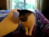 Birbirinden sevimli iki arkadaş - Funny videos - Komik videolar
