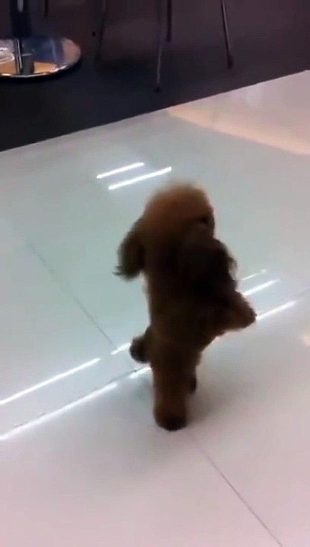 Cute dogs videos