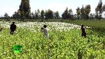 Afghan Overdose. Inside Afghanistans Heroin Trade (Trailer)