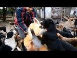 450 chiens jouent ensemble dans ce centre pour chiens abandonnés en Serbie