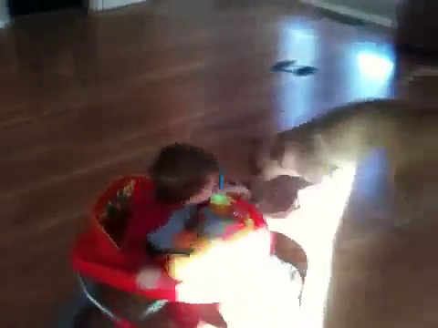 Dogs Pull Toddlers Stroller Around The House