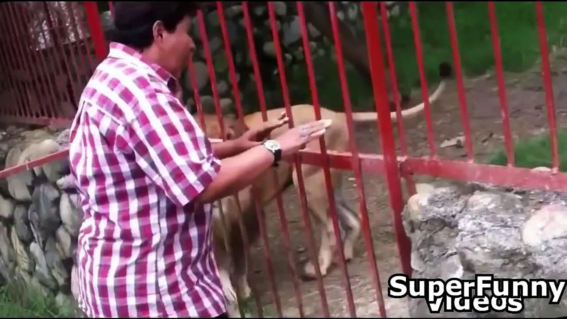 Cute Animal Videos Compilation 2015 - Cute Funny Videos Animals 2015