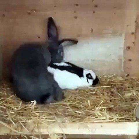 Con thỏ hài nhất quả đất. | Godialy.com