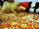 Funny Animals Dogs Cats Puppies-raKwM4b5smc-Q_N2LVkO0D4
