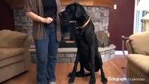 Funny Animals Dogs Cats Puppies-raKwM4b5smc     Funny Animals Dogs Cats Puppies-raKwM4b5smc  !!!-Q5o1yDdrWOo