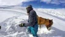 Un snowboardeur sauve un cheval coincé dans la neige !