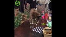 Chat piégé par son maitre... Hilarant!