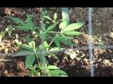 Regalbuto (EN) - Marijuana coltivata in una casa rurale: arrestato 35enne (23.10.15)